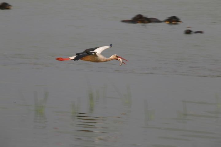 Samsun Kızılırmak Deltası Kuş Cenneti