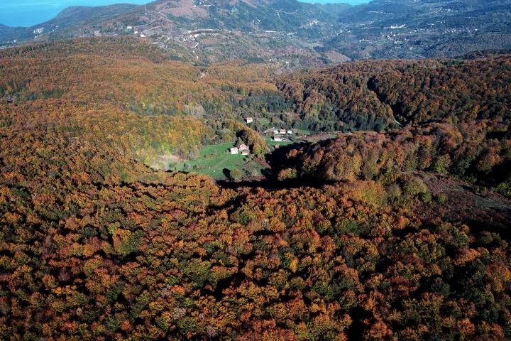 Kastamonu ormanları