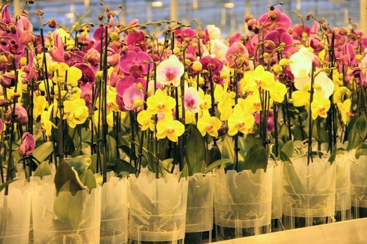 Orkide üretim tesisi