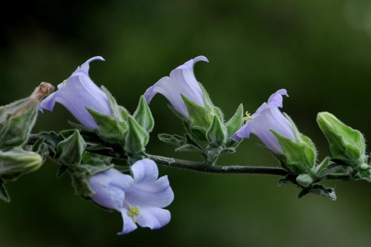 Bitki